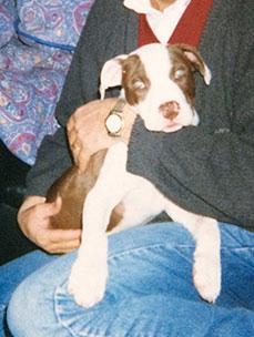 iron pit bull 1999