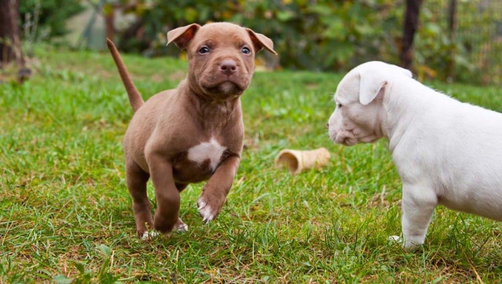 cuccioli-disponibili-2762