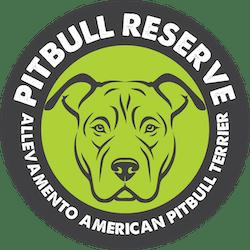 pitbull reserve verde medio small