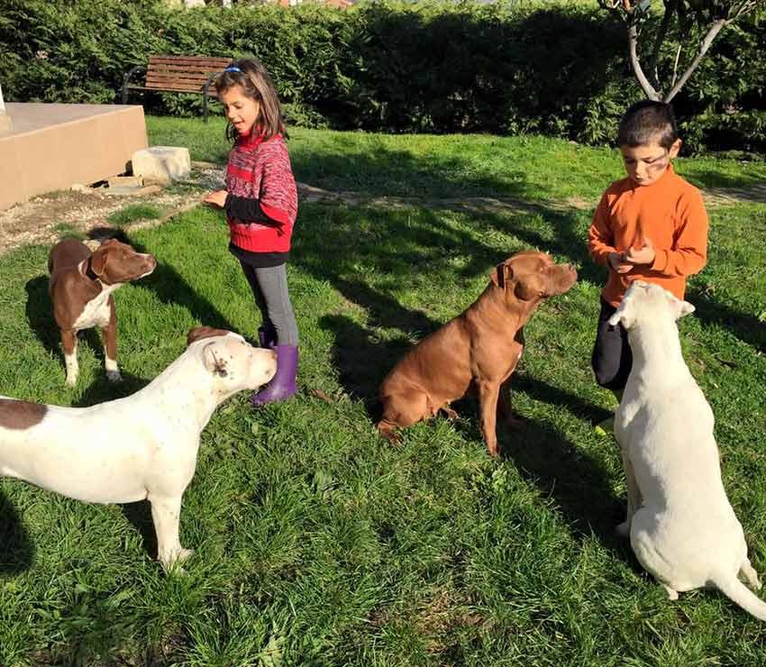 I nostri nipotini giulia e Daniele che da bambini giocano con 4 pitbull