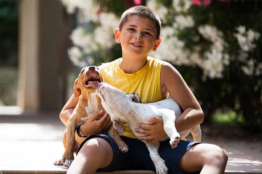 Bambino Daniele sorridente che gioca seduto con due cuccioli di pitbull in allevamento